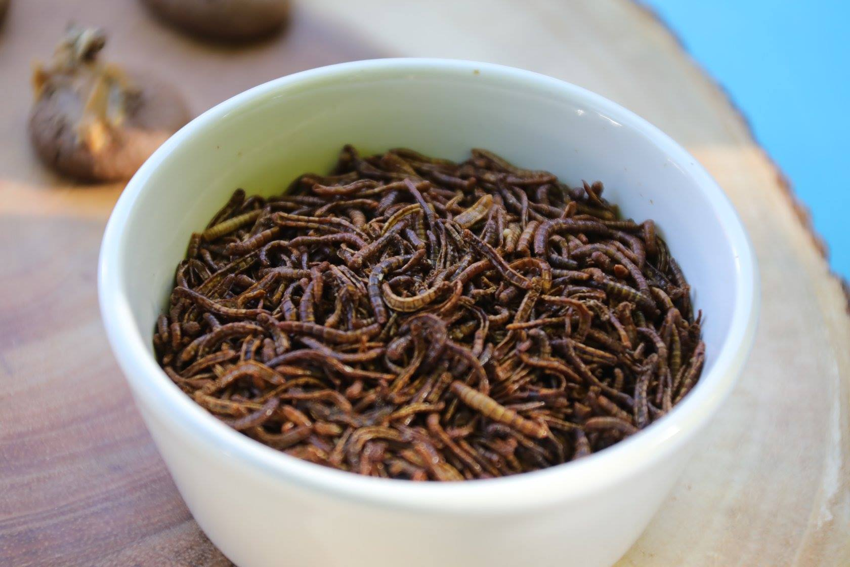 bowl of bugs