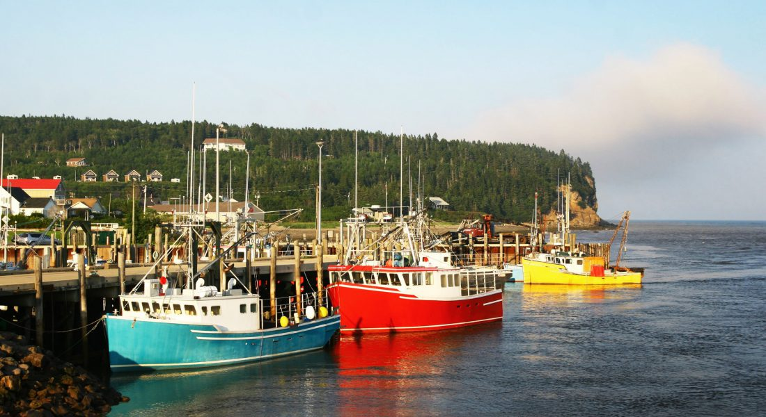 fishing boats in bay
