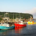 Fishing for Transparency: Farmed Fish Gains Market Share