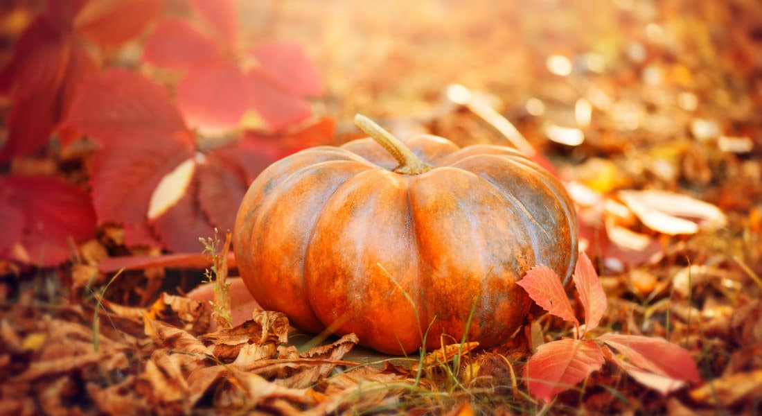10 restaurant marketing ideas for pumpkin spice and other fall flavors