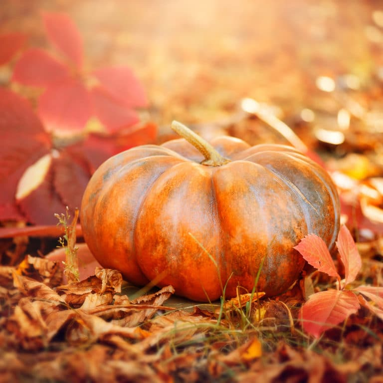 Autumn Halloween Pumpkin. Thanksgiving day background. Pumpkin p
